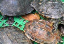 ปล่อยเต่าทำบุญ2